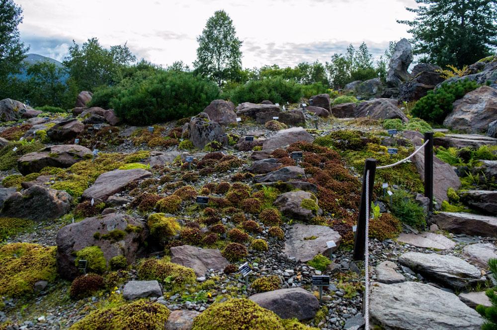 Botanic garden in Tromsø.